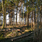 Logging in Swiss Forest